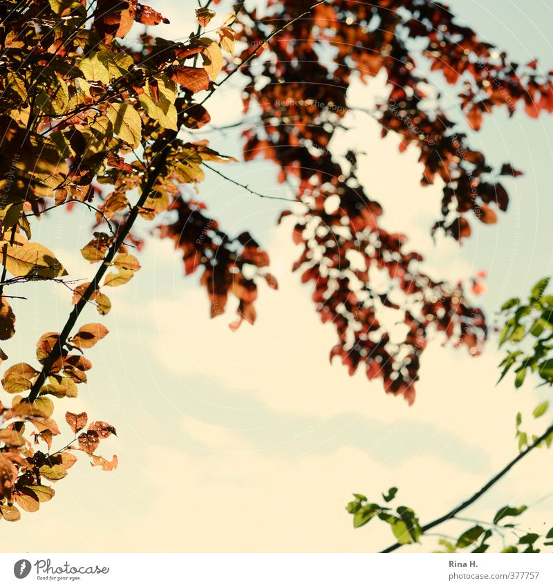 Sky Green Tree Red Leaf Beautiful weather Square Twigs and branches