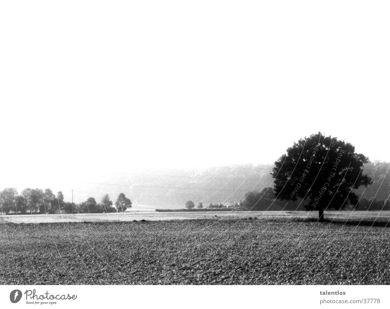landscape Tree Meadow Nature Far-off places Americas Black & white photo