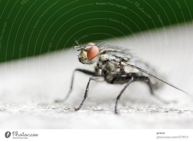 close-up Environment Nature Animal Wild animal Fly 1 Gray Green Sit Macro (Extreme close-up) Colour photo Exterior shot Deserted Copy Space top Day