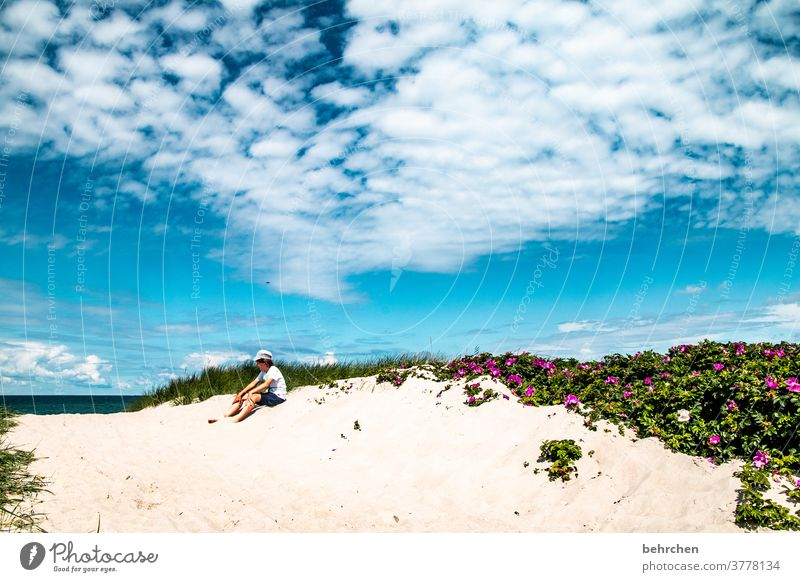 dream beach Beach Ocean duene Darss Baltic Sea flowers Exterior shot Sky Clouds Nature Landscape coast Colour photo Vacation & Travel fischland-darß Relaxation