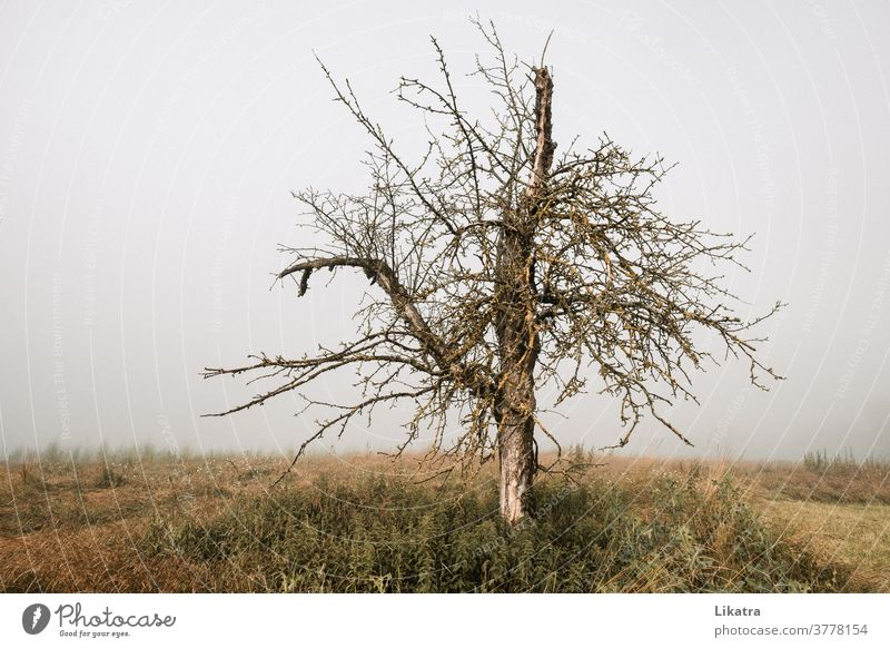 gnarled tree Fog To go for a walk Old Sparse Nature Apple tree Brittle foggy Landscape Fruit trees Wild