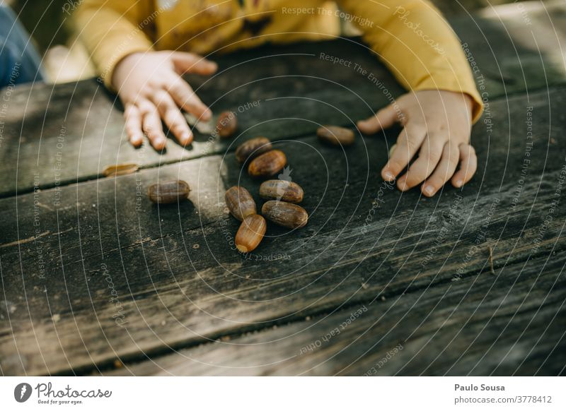 Child playing with oak acorns Acorn Oak tree Autumn Authentic Autumnal fall Playing outdoors Nature Autumn leaves Autumnal colours Plant Exterior shot Tree