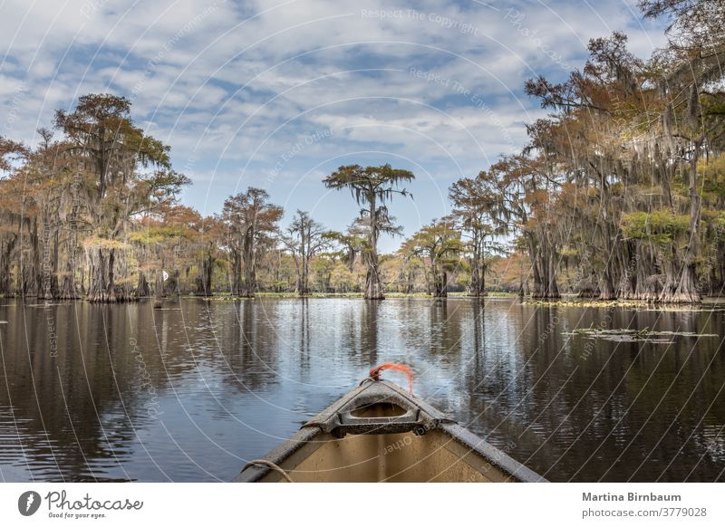 Canoeing on the Caddo Lake between Cypres trees, Texas summer canoe canoeing cypress trees state park texas caddo lake spanish moss water mystic fairytale