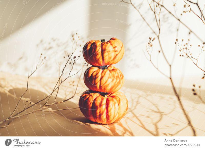 Tiny orange Pumpkins. Autumn concept pumpkin white background autumn shadows seasonal misty celebration decoration holiday nature harvest fall happy october