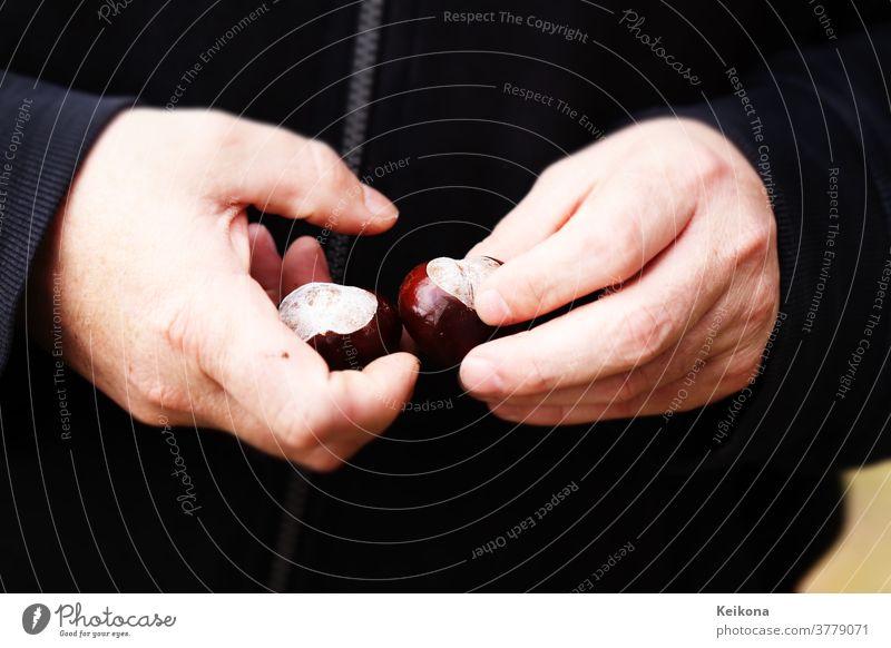 Men's hands hold freshly peeled chestnuts. Dark background. Chestnut Sweet chestnut sweatshirt Sweater Black stop Park amass Autumn Man Fingers Sámen Round