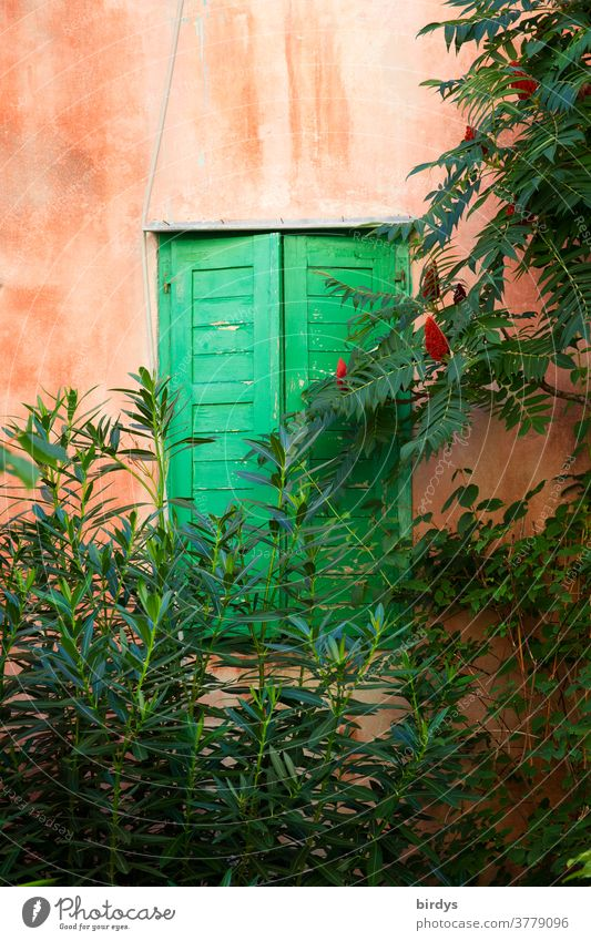 Window with closed, green shutters in a red wall with plants in front of it Closed Facade Red Part of the plant vegetation Branches and twigs Harmonious Cozy
