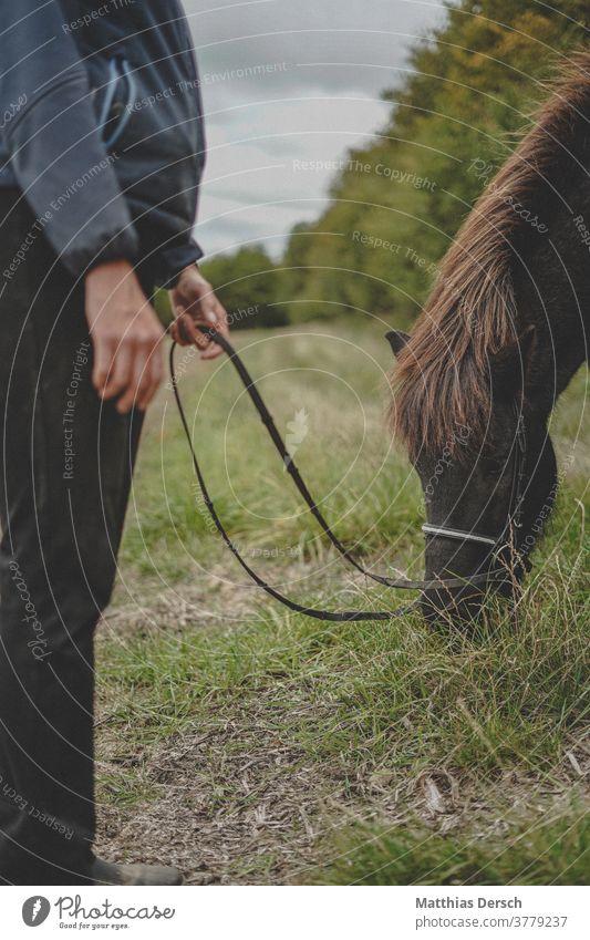 Horse feeds Horse's head Animal Animal portrait Exterior shot Mane Iceland Pony Nature Colour photo