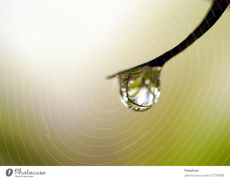 1750 / Once again a drop from the drop aunt - or a raindrop hangs at the tip of a stalk Drop Water Drops of water Wet Rain Plant Close-up