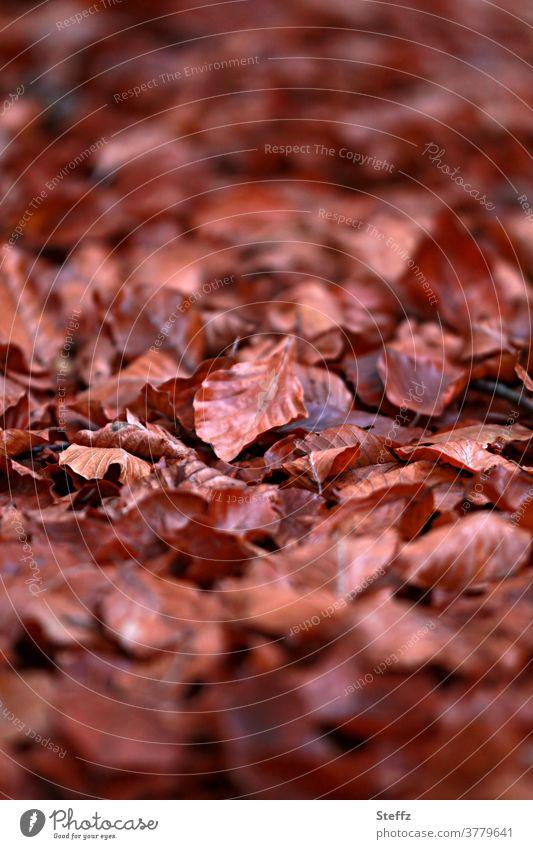November blues Autumn leaves autumn leaves autumn leaf Brown November mood Autumnal autumn light Autumn day autumn mood Sense of Autumn Autumn feeling