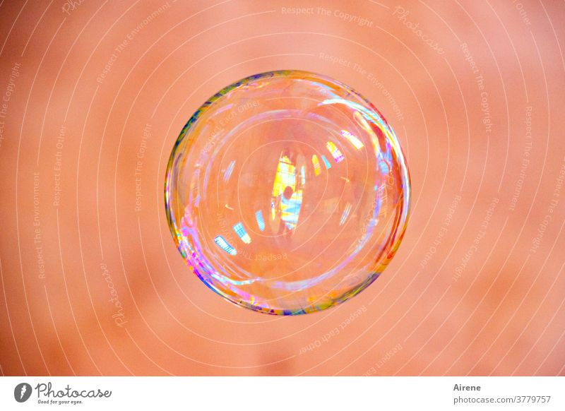 for a little while... Soap bubble Flying Dazzling Easy Glittering Ease Colour Fragile Round Sphere Bubble Esthetic Light (Natural Phenomenon) Playing Reflection