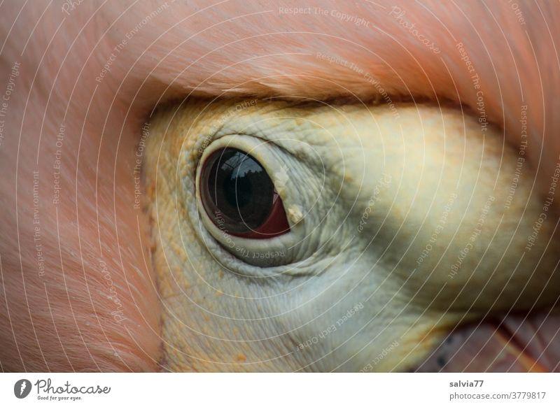 Everything at a glance Animal Bird Eyes Nature Detail Pelican eye Beak Animal portrait Pink Wild animal Looking Macro (Extreme close-up) Animal face Observe