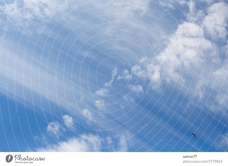 vital | atmosphere Sky Clouds cirrostratus clouds Blue Nature birds Beautiful weather Weather Atmosphere Air Meteorology Colour photo Elements Climate