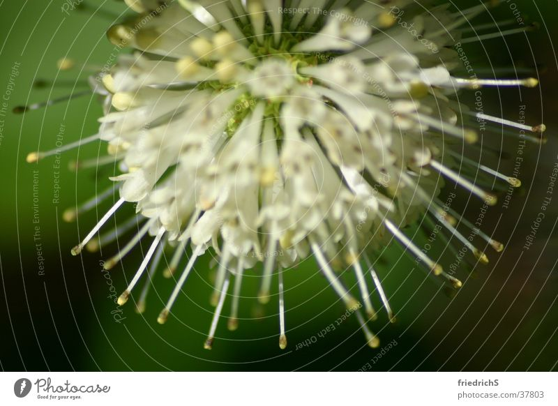 flower wreath Thistle Blossom Macro (Extreme close-up) Corona macro shot