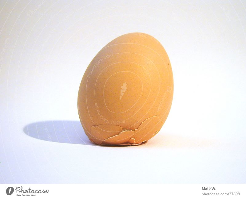 Egg of Columbus Creativity Groundbreaking Brave Nutrition Past Columbus Monument Morning
