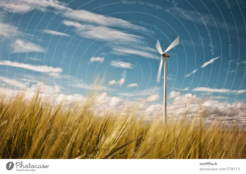Wind turbine in a grain field Grain Energy industry Renewable energy Wind energy plant Environment Nature Landscape Air Sky Horizon Sun Summer Gale Grass Field