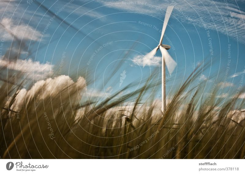 Wind turbine behind grain Grain Agriculture Forestry Energy industry Renewable energy Wind energy plant Environment Nature Landscape Sky Sunlight Summer Gale