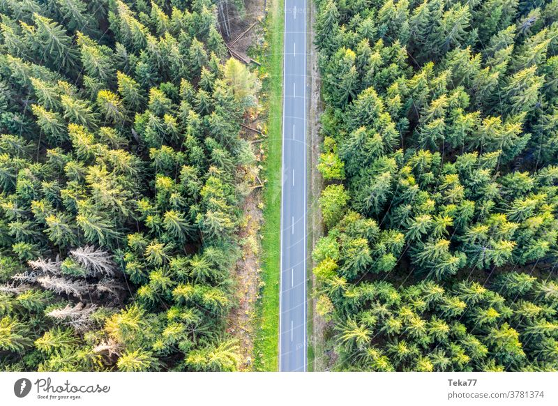 a forest street from above forst from above transportation country road car truck cars way path shadown sun sun forest nature needle forest trees summer