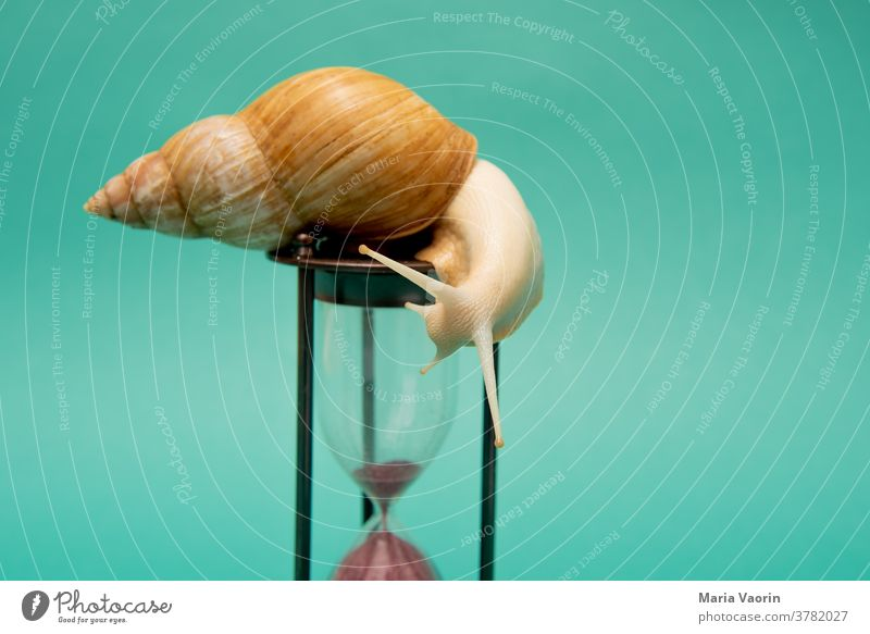 at snail's pace Slowly sluggishness Speed expiration date Crumpet colored background Colour photo Hourglass Time Point in time 5 to 12 Clock tempolimit