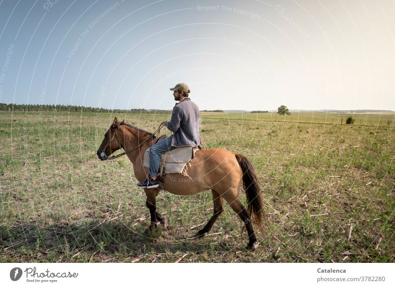 Rider on farmland Blue Brown green Summer Nature Landscape horses Grass Plant Willow tree Farm worker Agriculture Young man Sky Meadow Environment Horse Steppe
