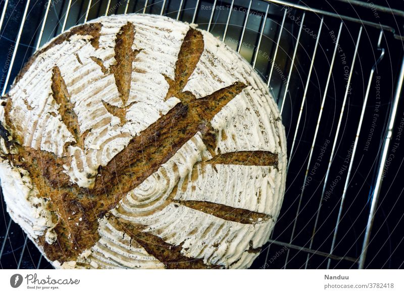 Sourdough bread home-baked sourdough wholemeal bread Bread Baking bread baked ferment Whole foods self-catering Hip & trendy Nutrition prepper cake selfmade