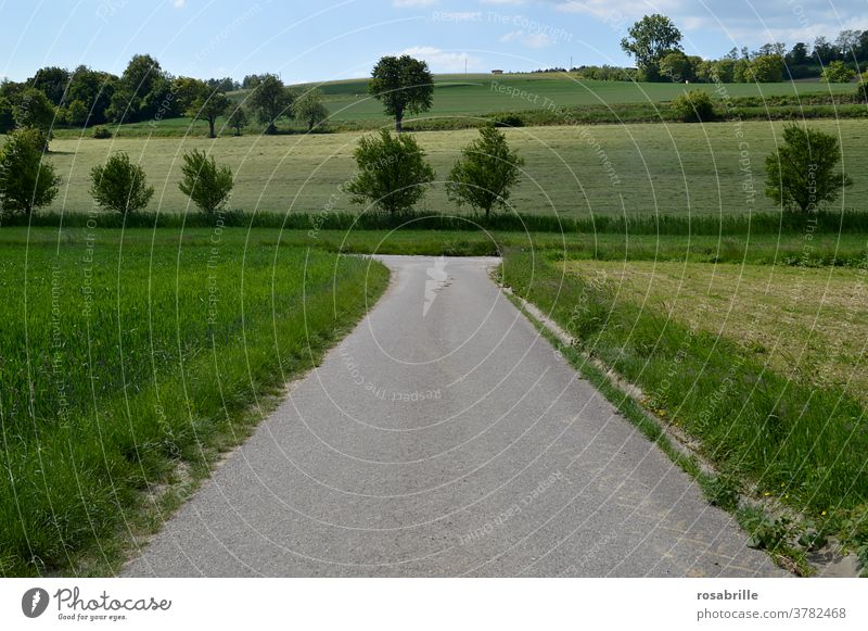 right or left? - A path forks off Decide Turn off Nature To go for a walk Landscape Right Left decide Curve Change Street Going Hiking travel Rural Green