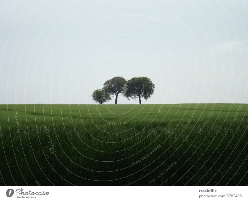three trees in an open field on a rainy day | neighborhoods Tree Field Lonely at the same time Landscape Nature Dreary Central centred cloudy Agriculture Green