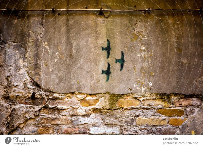 Three swallows Old building on the outside Fire wall Facade House (Residential Structure) rear building Backyard Courtyard Interior courtyard downtown