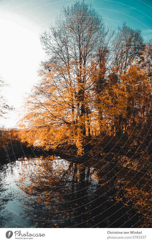 Autumnal trees at a small lake are reflected in the water. Falling leaves of different colours lie under the trees and in the water huts Reflection in the water