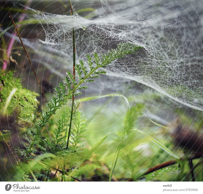 underwater Stalk Blade of grass Spider's web Cobwebby Glittering Small Wild flaked bushes Drops of water Plant Nature Environment Exterior shot Close-up Detail
