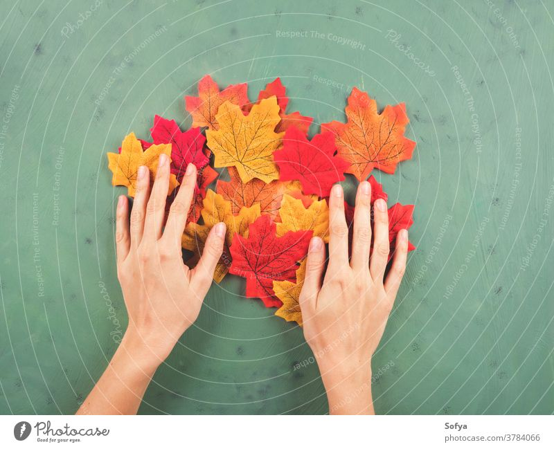 Female hand touching autumn leaves on green fall hands fashion holding female october walk background color maple red seasonal symbols flat lay yellow orange