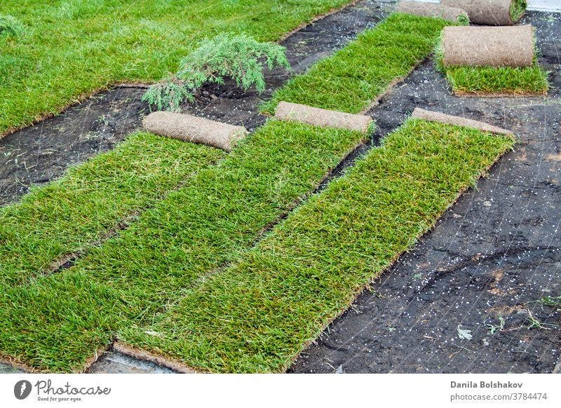 stacking of roll green lawn grass. Laying lawn grass in rolls at place of growth. covering natural grass grass field outside layer plant yard playground layed