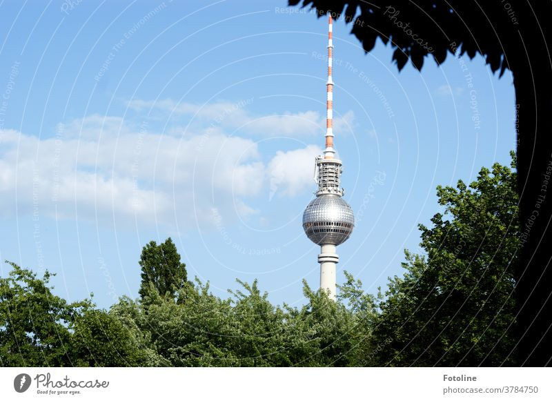 Asparagus with salad - or the Berlin TV tower towers between lots of greenery in the blue summer sky Berlin TV Tower Alexanderplatz Television tower Landmark