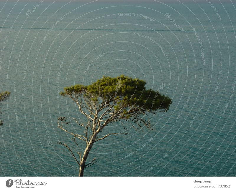 Pine tree at Gargano Tree Calm Relaxation Water Loneliness