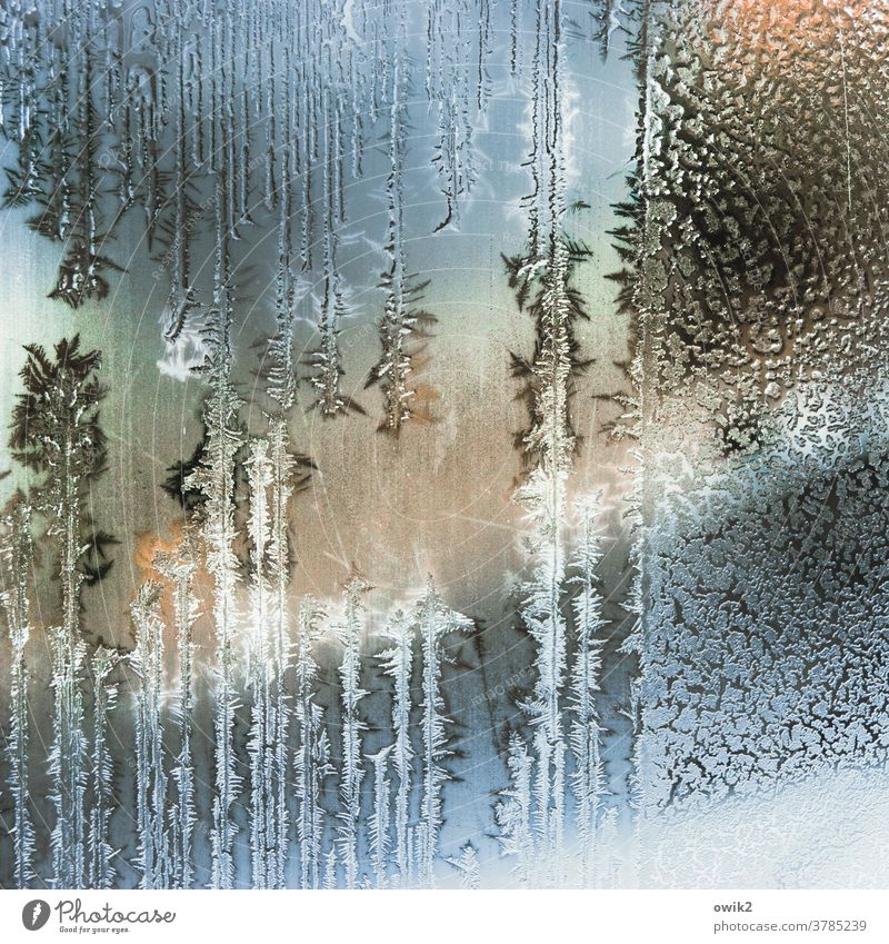 state of aggregation Winter Ice Frost Pane Glass Authentic Cold Bizarre Ice crystal Structures and shapes Day Interior shot Close-up Detail Pattern Deserted