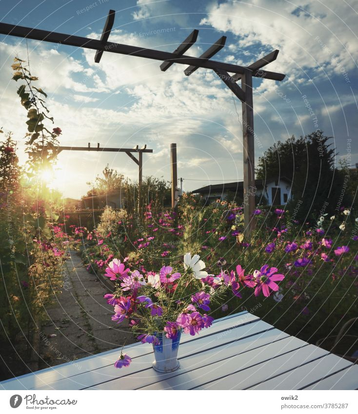 Garden evening Environment Nature Landscape Plant Sky Beautiful weather Summer Sun Clouds Flower Bushes Blossom Wild plant Wood Pole Pérgola Cosmos Movement