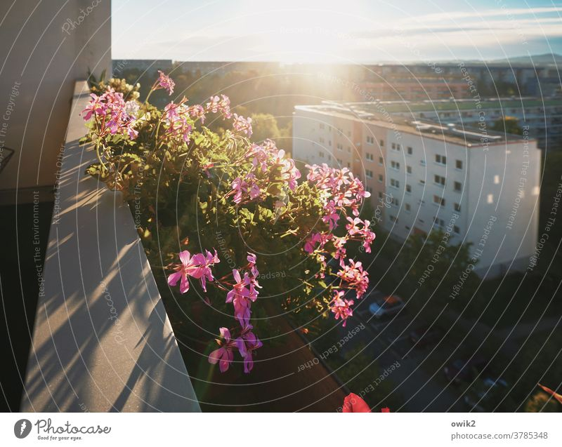Flowers in concrete Balcony Balcony plant Blossom Beautiful weather Pot plant Plant Nature Growth Glittering Near Idyll Colour photo Hope Unwavering Life