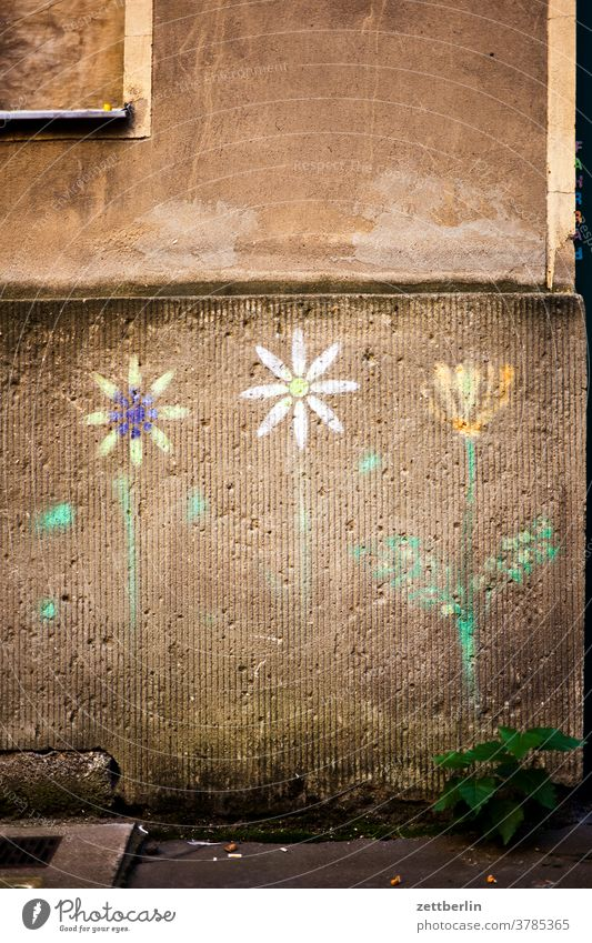 Old building facade with painted flowers on the outside Fire wall Facade Window House (Residential Structure) Sky Sky blue rear building Backyard Courtyard