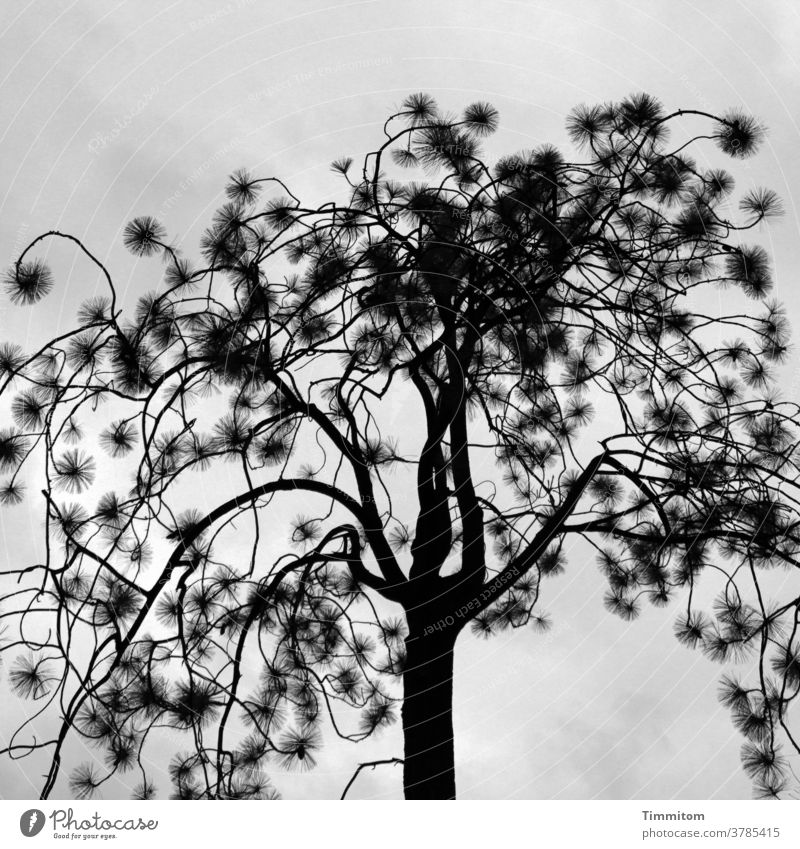 Tree with small pimples Nature Branches and twigs Thin Sky Clouds Gray Black