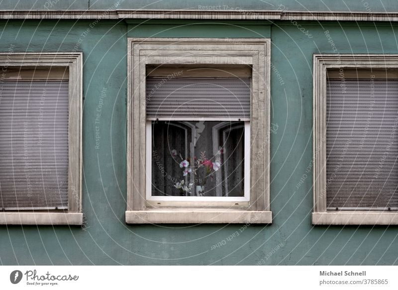 Old house wall, windows with closed shutters and a window with flowers Wall (building) Facade Wall (barrier) Deserted Exterior shot Colour photo Building Window