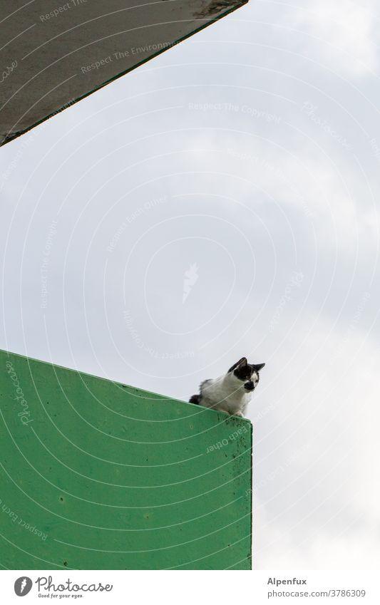 (M)lookout post Cat Observe monitoring Observing cat Pelt Colour photo Curiosity Cute Whisker Animal portrait Looking Cat's head Animal face Domestic cat