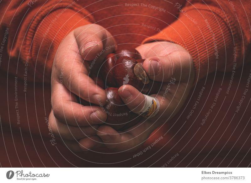 Chestnuts in a child's hand chestnuts Autumn Orange Nature Autumnal