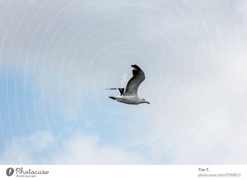 a seagull in flight over the Baltic Sea Seagull Bird Ocean coast Sky Grand piano Animal Nature Exterior shot Flying Freedom Colour photo Wild animal Deserted