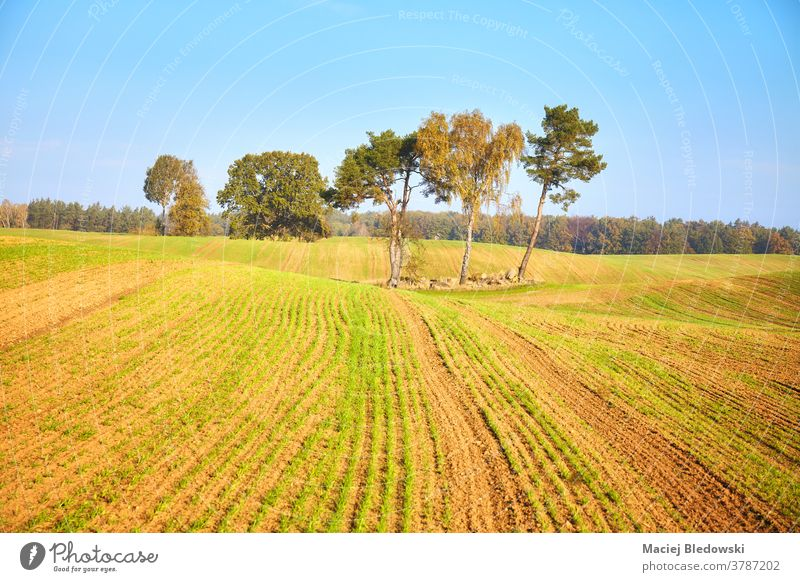 Autumnal landscape with trees on a field. rural autumn nature beautiful agriculture countryside morning nobody natural horizon sky blue outdoors scene