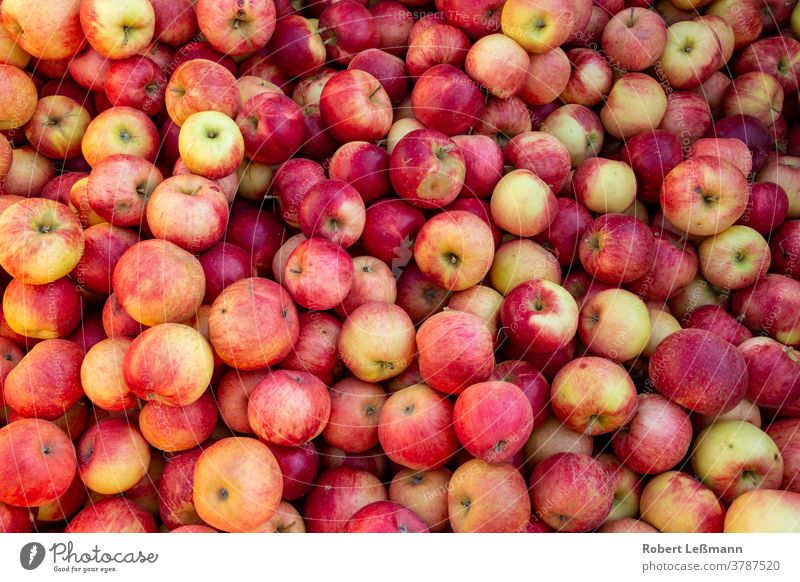 many delicious ripe apples (Santana) in one pile santana Mature fruit Eating Apple Red Fresh sales market salubriously organic Harvest cute Juicy Diet Autumn