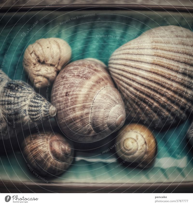 memories of seashells Snail shell Collection Close-up Ocean remembrances Longing Beach Vacation & Travel Mussel Mussel shell Detail coast Water marine Summer