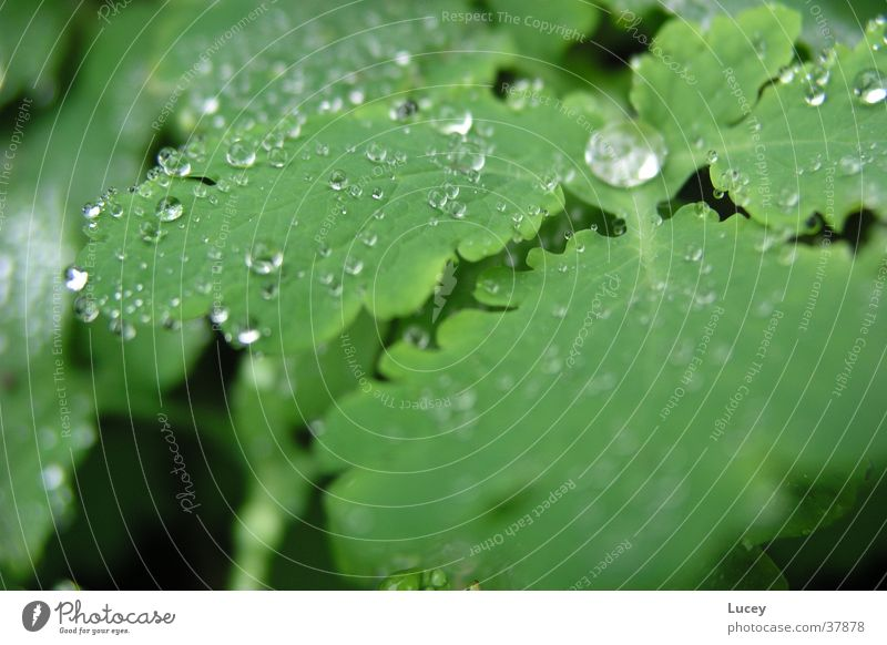After the rain Green Leaf Plant Rain Drops of water Water