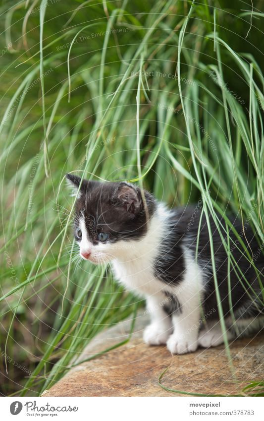 little cats have little paws Foliage plant Pet Cat 1 Animal Baby animal Looking Sit Wait Cuddly Green Black White Interest pussy pussycat tenancy agreements