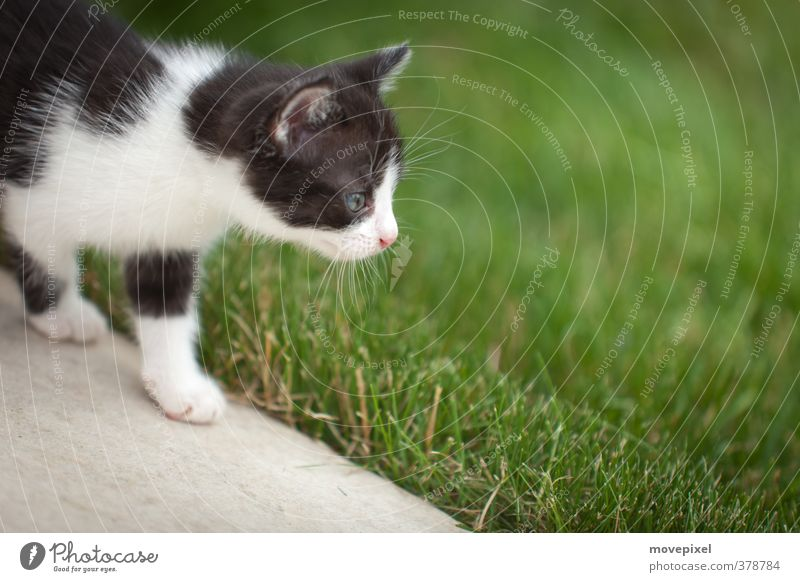 little cat goes on a voyage of discovery Garden Meadow Pet Cat 1 Animal Baby animal Discover Going Small Curiosity Bravery Interest strays mouse hunter