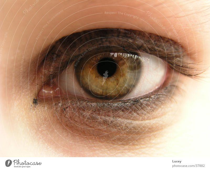 Woman Green Eyes Yellow Make-up Cosmetics Swing Iris Eyeliner