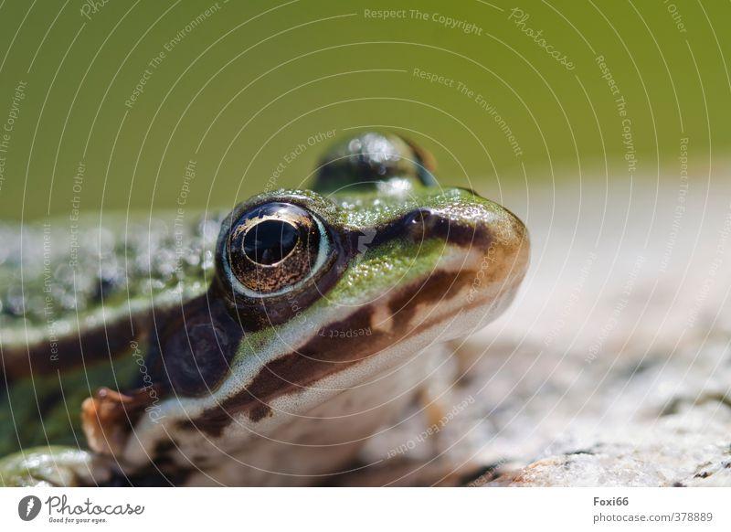 Green White Animal Cold Brown Wild animal Animal face Frog Amphibian